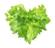 Lattuga verde del cuore isolata Fotografie Stock Libere da Diritti