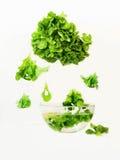 Lattuga verde, foglia cadente, ciotola di vetro con acqua su bianco Fotografia Stock Libera da Diritti