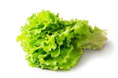 Lattuga verde fresca Immagini Stock Libere da Diritti