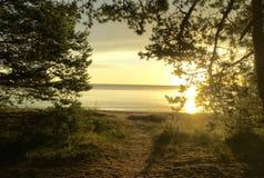 latvia baltiska estonia nära havssomethere tallinn Arkivfoto