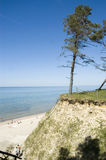Latvia. Beach and pine on the steep coast of  Baltic Sea Stock Photography