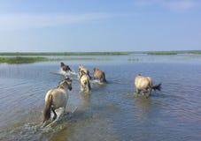 latvia Lago Engures Imágenes de archivo libres de regalías