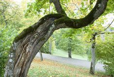 Latvia`s Park In Autumn Royalty Free Stock Image