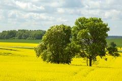 latvia Vår Våldta i blomningar Fotografering för Bildbyråer
