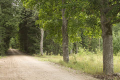 Latvian nature. Small gravel road in the forest not far from Ventspils road Stock Photos