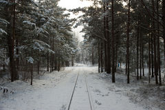 Latvian rural landscape. Winter railway through snowy pines Royalty Free Stock Photography