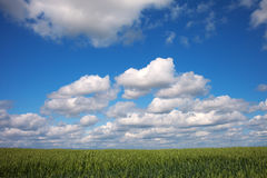 Latvian summer landscape. Royalty Free Stock Photography