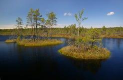 Latvian swamp (2) Royalty Free Stock Photos