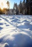 Latvian zima las obraz stock