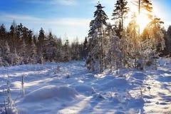 Latvian zima las zdjęcia royalty free