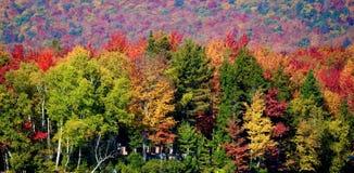 Laub Adirondack-Berge Stockfoto