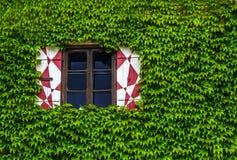 Laub bedeckte Fenster stockfoto