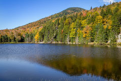 Laub in den weißen Bergen staatlicher Wald, New Hampshire, USA stockbild