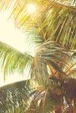 Laub der tropischen Palme in Sun-Strahlen Lizenzfreie Stockfotos