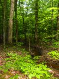 Laub entlang kleinem Strom in den Kaskaden-Konserven stockbild
