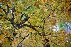 Laub, Herbstfarben in Zell morgens sehen, Salzkammergut, Österreich Stockfoto