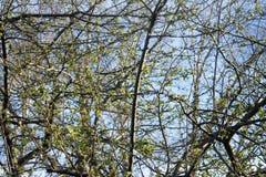 Laub im Frühjahr Lizenzfreie Stockfotos