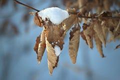 Laub mit Schnee im Winter stockfotos