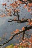Laub und Niederlassung der geschlechtsreifen Eiche im Herbst Lizenzfreie Stockbilder