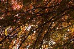 Laub unter einem Baum Stockfoto
