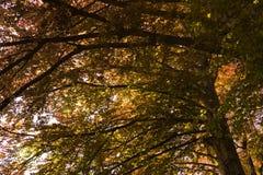 Laub unter einem Baum Lizenzfreies Stockfoto