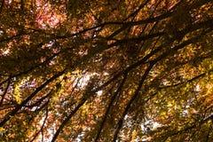 Laub unter einem tree-2 Stockfoto