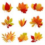 Laub-Vektorsatz des Herbstlaubs gelber vektor abbildung