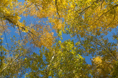 Laub von Bäumen gegen den Himmel Lizenzfreies Stockfoto