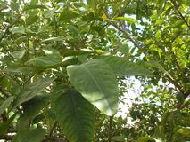 Laubbäume lizenzfreies stockfoto