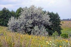 Laubbäume auf einer Wiese mit Gras und Blumen gegen den Himmel Stockfotografie