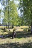 Laubbäume, Birken mit gefallenen Bäumen und Wurzeln, auf einer Steppe in den Naturreservat-Sanddünen, Baden-Baden Sandweier Lizenzfreie Stockfotografie