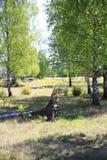 Laubbäume, Birken mit gefallenen Bäumen und Wurzeln, auf einer Steppe in den Naturreservat-Sanddünen, Baden-Baden Sandweier Lizenzfreie Stockfotos