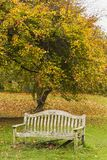 Laubbaum im Herbst durch alte Bank stockfotografie