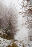 Laubbaumlandschaft während des Winters Stockfoto