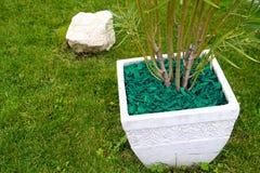 Laubdecken-grüne dekorative Barke stockbilder