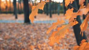 Laubfall in den Herbststadtpark Schöner Herbsthintergrund stock video footage