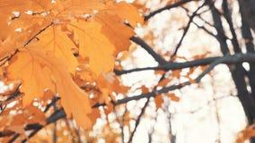 Laubfall in den Herbststadtpark Schöner Herbsthintergrund stock footage