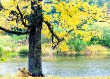 Laubvegetation über einem See im Herbst Lizenzfreies Stockfoto