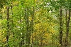Laubwald auf Herbstmorgen lizenzfreies stockfoto