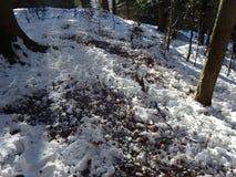 Laubwald im Winter, Stockbild