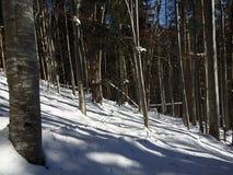 Laubwald im Winter, Stockfoto