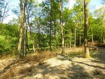 Laubwald nach hölzerner Ausnutzung stockfoto