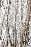 Laubwechselnde Baumaste umfasst im Schnee Stockbilder