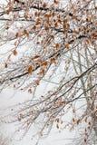 Laubwechselnde Baumaste während des Winters Lizenzfreie Stockfotografie
