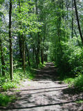 Laubwechselnder Wald Lizenzfreies Stockbild