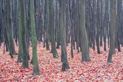 Laubwechselnder Wald des Herbstes Stockfotografie
