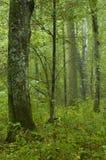 Laubwechselnder Waldregen nachher lizenzfreie stockfotos