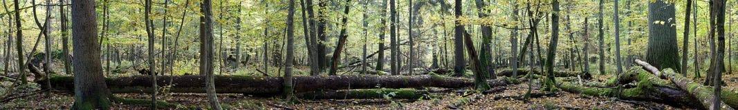 Laubwechselndes herbstliches Waldpanorama Stockbild