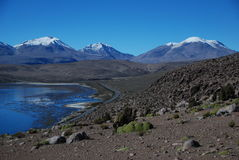 Lauca national park Stock Images