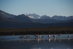 Lauca national Park - Chile Royalty Free Stock Image